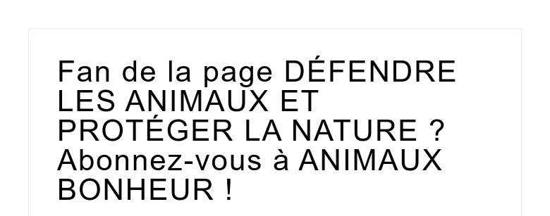 Fan de la page DÉFENDRE LES ANIMAUX ET PROTÉGER LA NATURE ? Abonnez-vous à ANIMAUX BONHEUR !