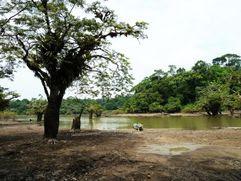 ضفاف نهر الأمازون – البرازيل