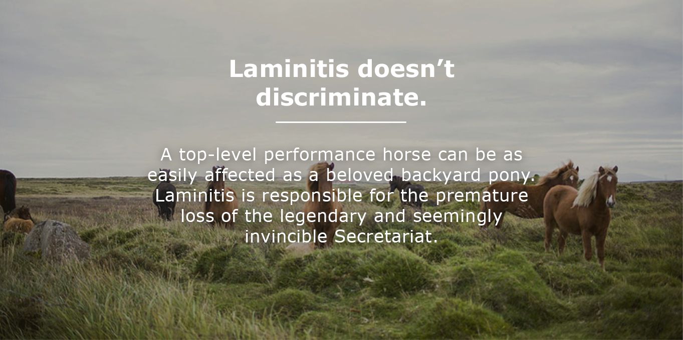 Laminitis doesn't discriminate. A top-level performance horse can be as easily affected as a beloved backyard pony. Laminitis is responsible for the premature loss of the legendary and seemingly invincible Secretariat.