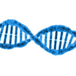 dna-1370603787LgY (1)