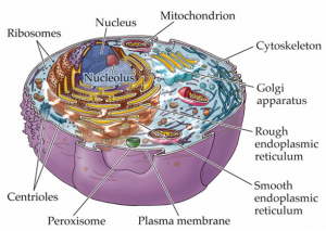 cell-organelles