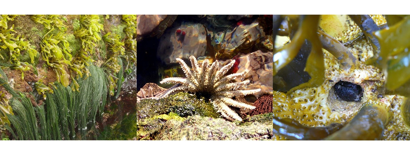 Diversity of Inter-Species Interactions Affects Functioning of Ecological Communities