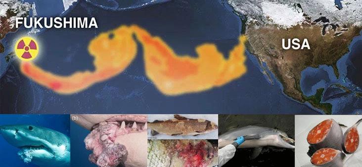 Daganatok burjánzanak a tengeri élőlényekben - így kerülnek a konzervbe?