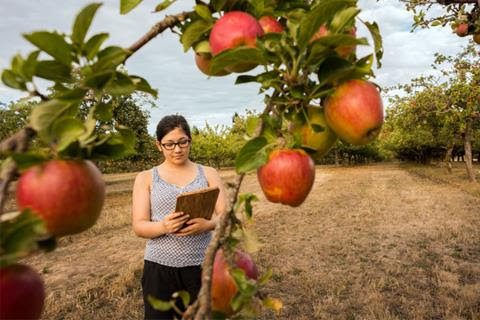A woman checks her clipboard while assessing an apple tree.