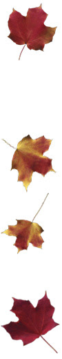 leaves-ground-r.jpg