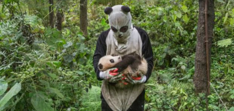 Люди-панды