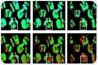 Innovative System for Monitoring Plant Health Through Fluorescence Imaging