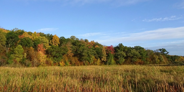 Hillside maples near the St. Croix River access at Wild River State Park