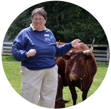 Elaine Shirley with Milking Devon Cattle
