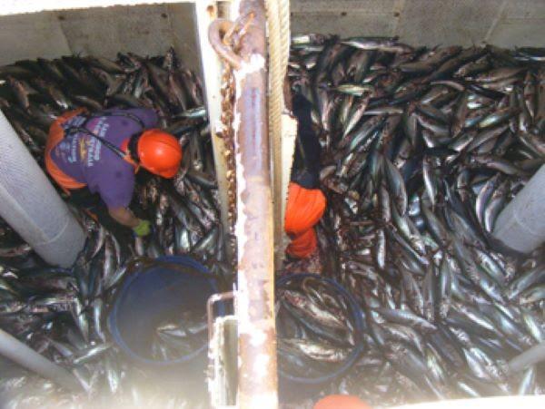 Pesca de arrastre depredadora.Foto www.ciperchile.cl