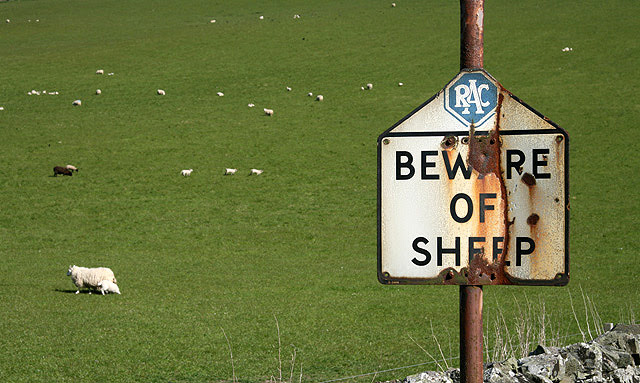 File:Beware of sheep - geograph.org.uk - 1304806.jpg