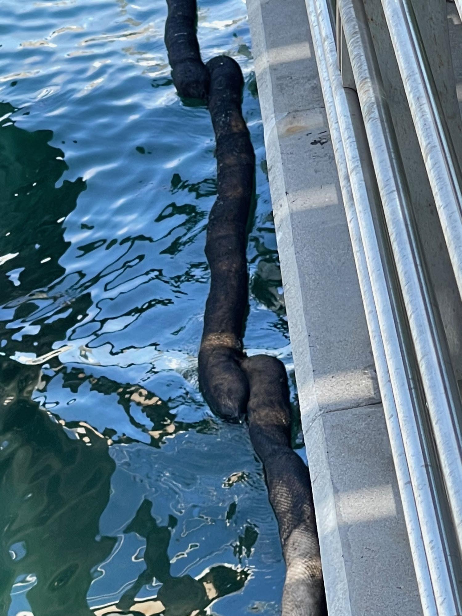 Mystery oil discharge response San Juan Harbor