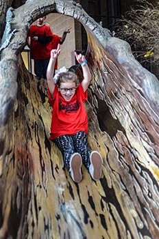 girl goes down Big Tree slide at Outdoor Adventure Center with arms raised