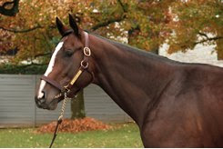 Federal Case at the 2018 Keeneland November Breeding Stock Sale