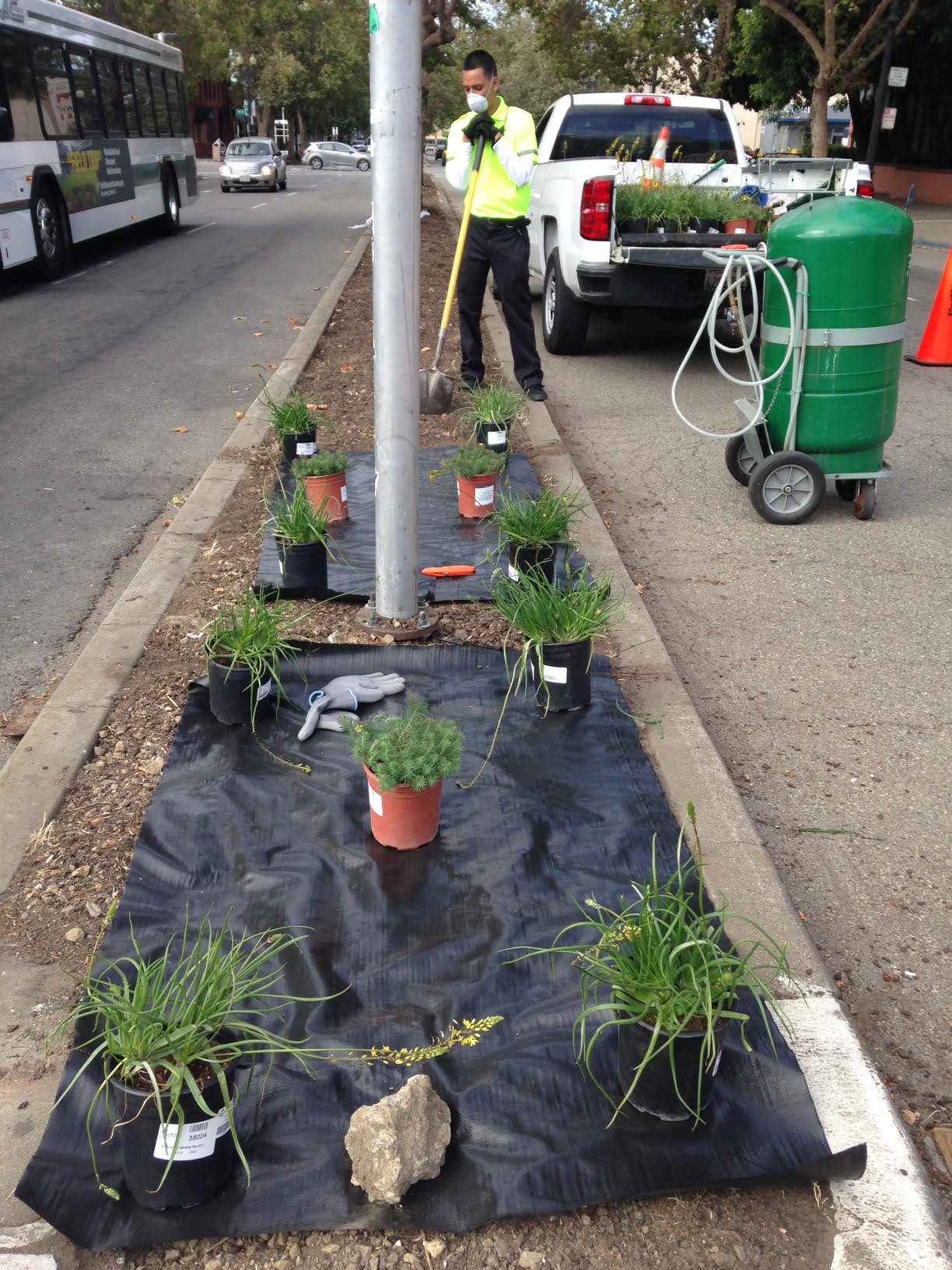 Median Planting Jack London