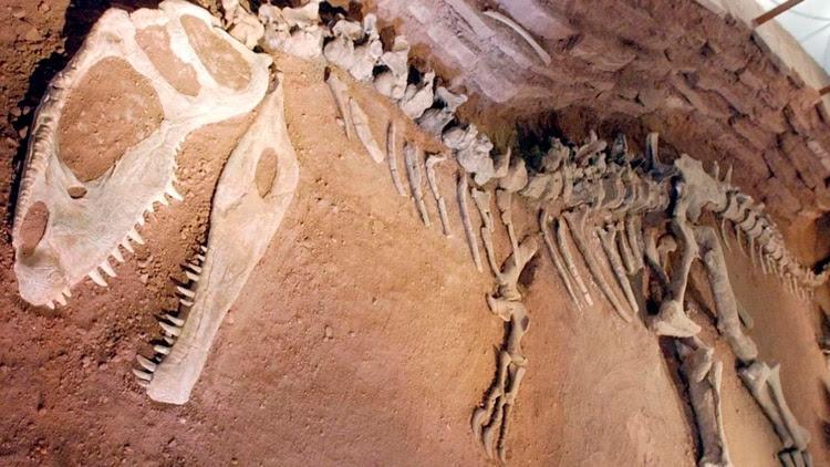 Argentina es una tierra prolífera de dinosaurios (Télam)