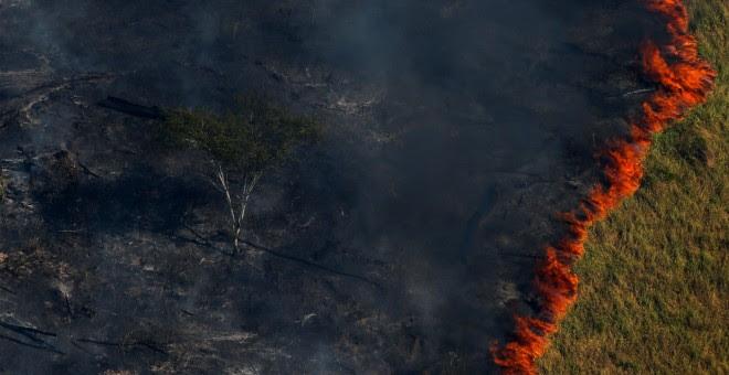 Un bosque en llamas durante la 'Operación Ola Verde' realizada por agentes del Instituto Brasileño de Medio Ambiente y Recursos Naturales Renovables para combatir la tala ilegal en la sureña región del estado de Amazonas.- REUTERS