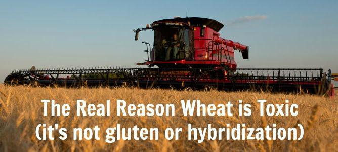 toxic wheat