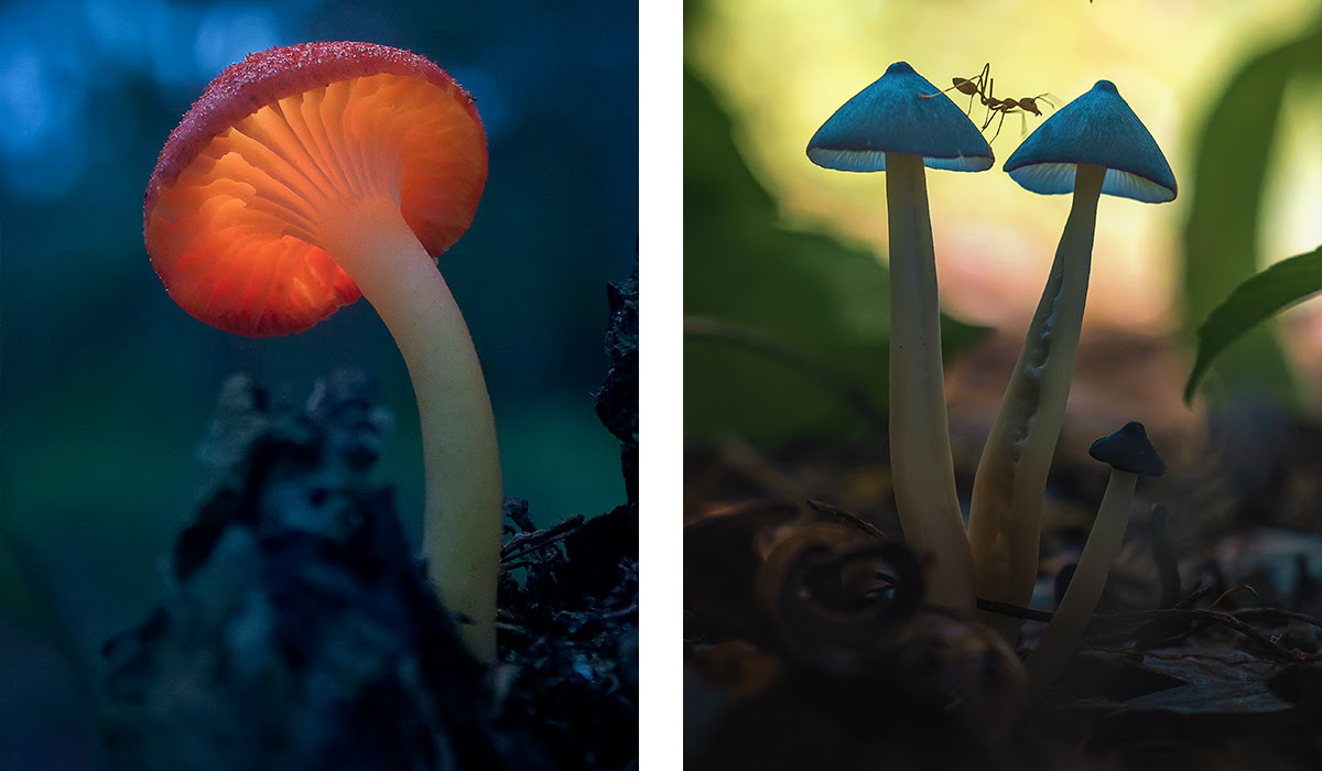Images by Roni Hendrawan