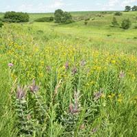 York Prairie Natural Area