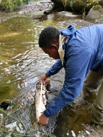 Volunteer measuring a dead fish by the stream
