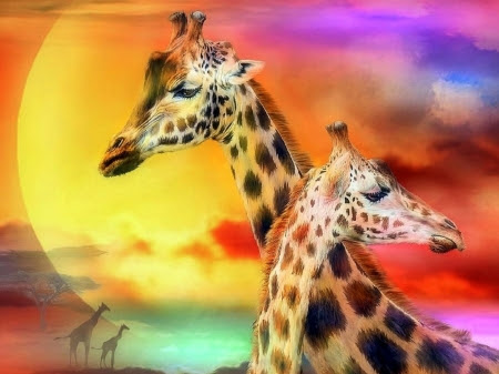 Giraffe Couple - animals, wildlife, love four seasons, giraffes, family, warmth, beloved valentines, love, colors