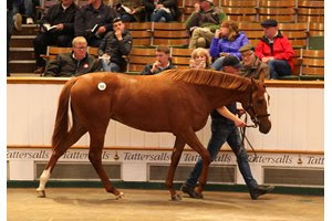 The Galileo filly consigned as Lot 525 brought the highest price of the day at Tattersalls