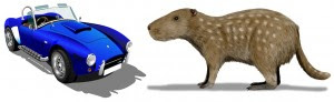 Josephoartigasia Rat & automobile