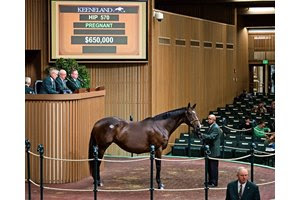 Conquest Eclipse brings the top price during the second session of the Keeneland November Sale