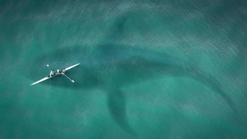 FOTO: Un temible tiburón 'Guasón' se vuelve viral en las redes sociales