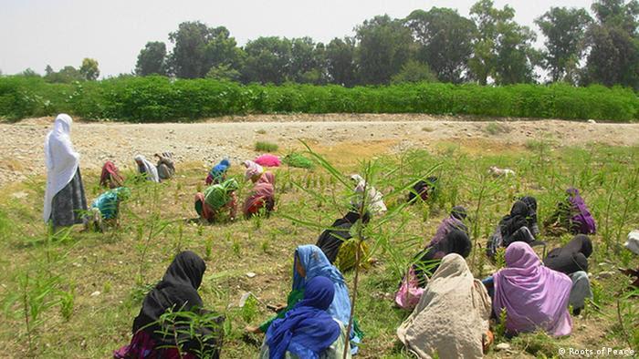 Frauen arbeiten im Feld (Roots of Peace)
