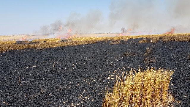 Image result for израиль горит поле